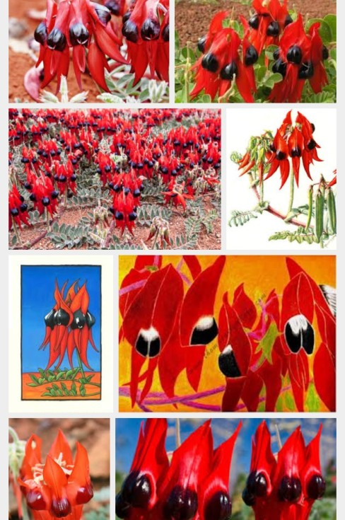 Image gallery via Google Images